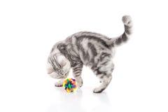 Χαριτωμένο τιγρέ παιχνίδι παιχνιδιού γατακιών Στοκ Φωτογραφία