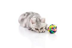 Χαριτωμένο τιγρέ παιχνίδι παιχνιδιού γατακιών Στοκ Εικόνα