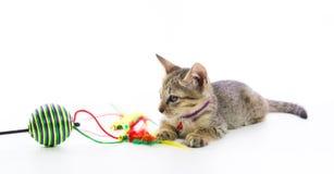 Χαριτωμένο τιγρέ παιχνίδι παιχνιδιών γατακιών που απομονώνεται Στοκ εικόνες με δικαίωμα ελεύθερης χρήσης