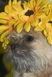 Χαριτωμένο τριχωτό σκυλί Στοκ Εικόνες