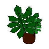Χαριτωμένο φυτό με τα μεγάλα φύλλα στην απομονωμένη ύφος διανυσματική απεικόνιση κινούμενων σχεδίων δοχείων Στοκ εικόνες με δικαίωμα ελεύθερης χρήσης
