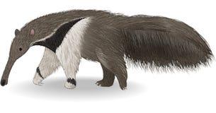 Χαριτωμένο anteater που απομονώνεται στο άσπρο υπόβαθρο ελεύθερη απεικόνιση δικαιώματος