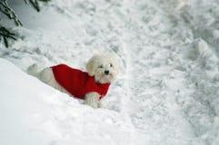 χαριτωμένο dogie Στοκ Εικόνες