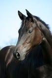χαριτωμένο foal Στοκ Φωτογραφία