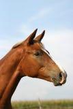 χαριτωμένο foal Στοκ εικόνες με δικαίωμα ελεύθερης χρήσης
