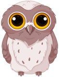 Χαριτωμένο owlet Στοκ φωτογραφία με δικαίωμα ελεύθερης χρήσης
