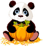 χαριτωμένο panda Στοκ φωτογραφία με δικαίωμα ελεύθερης χρήσης