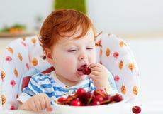 Χαριτωμένο redhead μωρό νηπίων που δοκιμάζει τα γλυκά κεράσια καθμένος στο highchair στην κουζίνα Στοκ Εικόνα