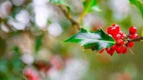 Χαρούμενα Χριστούγεννας ρεαλιστική τοπ επιγραφή ηλεκτρονικού ταχυδρομείου μούρων κάρδων κόκκινη ot Στοκ Φωτογραφίες