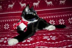 Χαρούμενα Χριστούγεννα και μαύρο κόκκινο τόξο γατών καλής χρονιάς Στοκ φωτογραφίες με δικαίωμα ελεύθερης χρήσης