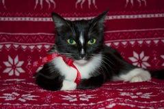 Χαρούμενα Χριστούγεννα και μαύρο κόκκινο τόξο γατών καλής χρονιάς Στοκ εικόνα με δικαίωμα ελεύθερης χρήσης