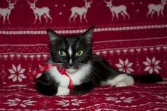Χαρούμενα Χριστούγεννα και μαύρο κόκκινο τόξο γατών καλής χρονιάς Στοκ φωτογραφία με δικαίωμα ελεύθερης χρήσης