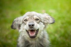 Χαρούμενο σκυλί στενό σε έναν επάνω περιπάτων Στοκ εικόνες με δικαίωμα ελεύθερης χρήσης