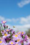 χαρούμενο υπόβαθρο με την εύθυμη διάθεση και τη μέλισσα Στοκ φωτογραφίες με δικαίωμα ελεύθερης χρήσης