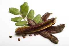Χαρούπι (siliqua Ceratonia) με το φύλλο στοκ εικόνες