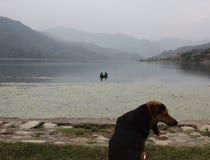 Χασμουρητά σκυλιών από Pokhara Lake, Νεπάλ Στοκ εικόνα με δικαίωμα ελεύθερης χρήσης