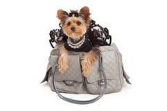 Χαϊδεμένο σκυλί στην τσάντα ταξιδιού σχεδιαστών Στοκ φωτογραφία με δικαίωμα ελεύθερης χρήσης