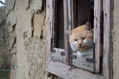 Χαλάρωση γατών στην άκρη παραθύρων Στοκ φωτογραφία με δικαίωμα ελεύθερης χρήσης