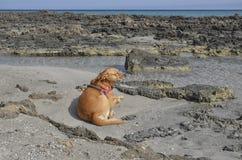 Χαλάρωση σκυλιών στην παραλία Στοκ φωτογραφία με δικαίωμα ελεύθερης χρήσης