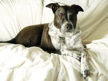 Χαλάρωση σκυλιών στοκ εικόνα