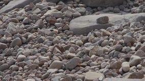 Χαλίκι στην παραλία απόθεμα βίντεο