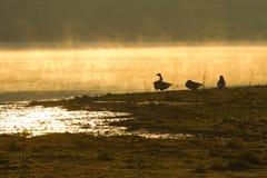 Χαλαρώνοντας ανατολή με τη χήνα Στοκ Φωτογραφίες