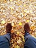 Χαλαρώστε στα φύλλα στοκ φωτογραφίες