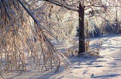 Χαλασμένα δέντρα μετά από μια ακραία θύελλα πάγου. Στοκ Εικόνες