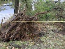 Χαλασμένα δέντρα μετά από τον τυφώνα αμμώδη φιλμ μικρού μήκους