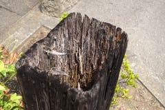 Χαλασμένη τερμίτης ξυλεία Στοκ φωτογραφίες με δικαίωμα ελεύθερης χρήσης