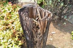 Χαλασμένη τερμίτης ξυλεία Στοκ φωτογραφία με δικαίωμα ελεύθερης χρήσης