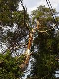 χαλασμένο δέντρο Στοκ Φωτογραφίες