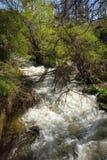 Χείμαρρος των ορμητικά σημείων ποταμού κοντά στη λίμνη Prespa, Ελλάδα Στοκ φωτογραφία με δικαίωμα ελεύθερης χρήσης