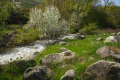 Χείμαρρος των ορμητικά σημείων ποταμού κοντά στη λίμνη Prespa, Ελλάδα Στοκ Φωτογραφίες