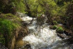 Χείμαρρος των ορμητικά σημείων ποταμού κοντά στη λίμνη Prespa, Ελλάδα Στοκ Εικόνες