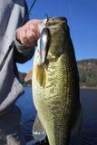 Largemouth πέρκες εκμετάλλευσης αλιείας ατόμων στοκ φωτογραφία