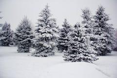 Χειμερινά δέντρα με το χιόνι Στοκ εικόνα με δικαίωμα ελεύθερης χρήσης