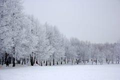 Χειμερινά δέντρα ομορφιάς με το χιόνι Στοκ Εικόνες