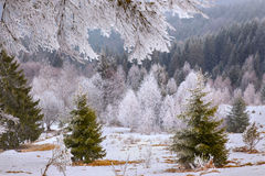 Χειμερινά δέντρα στο λευκό σαν το χιόνι υπόβαθρο Στοκ φωτογραφίες με δικαίωμα ελεύθερης χρήσης