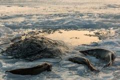Χειμερινά δίχτυα του ψαρέματος Στοκ Εικόνες