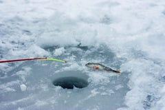 Χειμερινά αλιεία, ράβδος και ψάρια στον πάγο πλησίον με την τρύπα πάγου Στοκ εικόνες με δικαίωμα ελεύθερης χρήσης