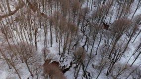 Χειμερινά γυμνά δέντρα Airshot στο υπόβαθρο χιονιού απόθεμα βίντεο