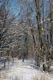 χειμερινά δάση στοκ εικόνες