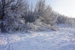 Χειμερινά δέντρα και χιόνι, στα ανθρώπινα ίχνη Στοκ Εικόνα