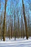 Χειμερινά δέντρα που καλύπτονται με το χιόνι ενάντια στο μπλε ουρανό Στοκ εικόνες με δικαίωμα ελεύθερης χρήσης
