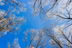 Χειμερινά δέντρα Στοκ Εικόνες