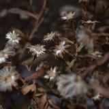 Χειμερινά λουλούδια Στοκ Εικόνα