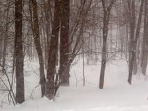 Χειμερινά ξύλα Στοκ Εικόνες