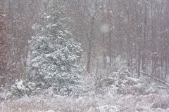 Χειμερινά ξύλα Στοκ Φωτογραφίες