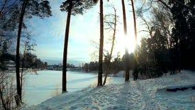 Χειμερινά ξύλα απόθεμα βίντεο